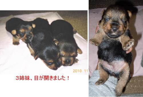 1129_20101129142604.jpg