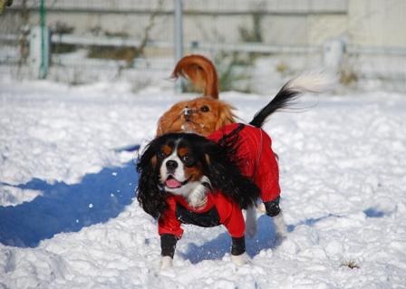 きらきら雪の中で
