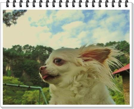 CIMG3936_20110914221724.jpg