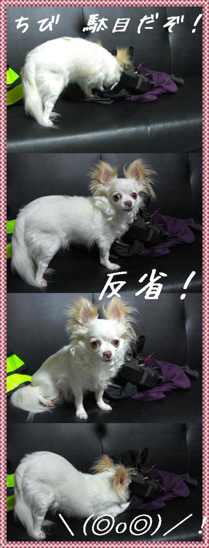 cats52558_20110810113948.jpg