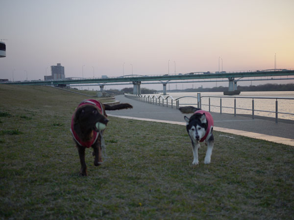 20110331河川敷2