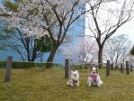 桜の木の下にて