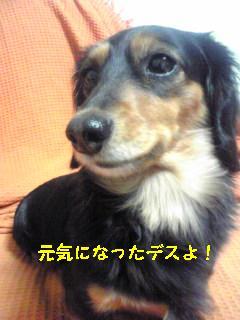 Image971.jpg