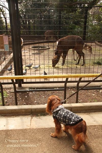 鹿とチャッピー