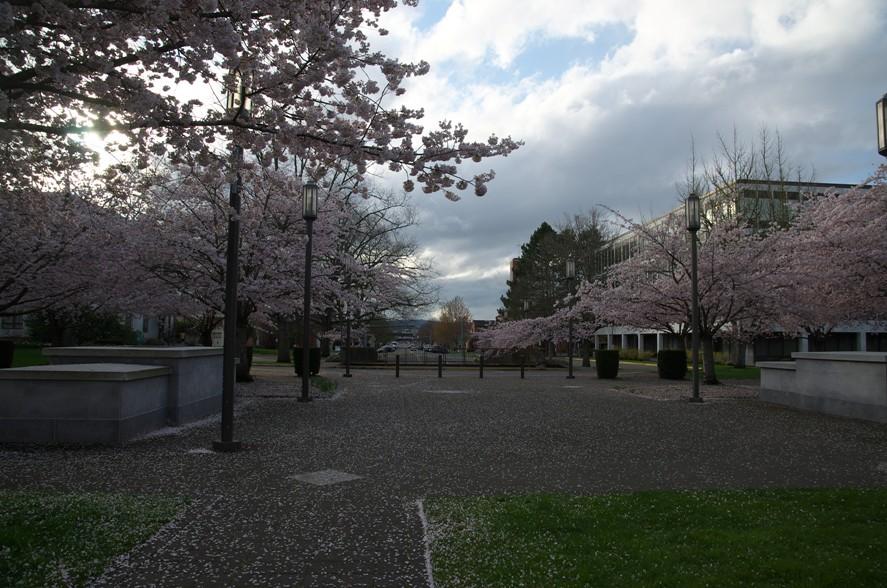 桜@Salem 2-4