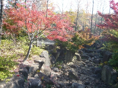 モリコロパークの紅葉10月8日