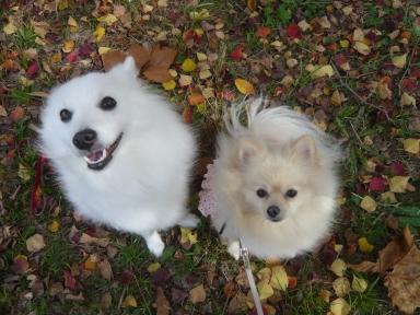 落ち葉の絨毯でしゅ
