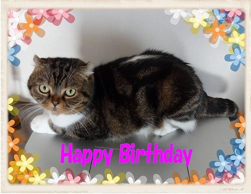 Birthday_201311221826432b7.jpg