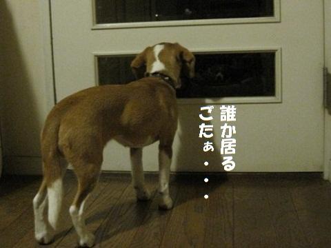 002_20101216173230.jpg