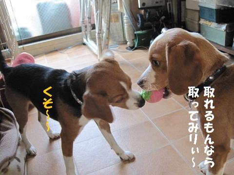 007_20110201104115.jpg