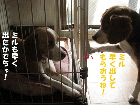 008_20110126171610.jpg