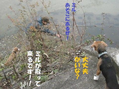 015_20101130211101.jpg