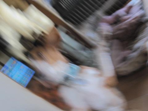 015_20110201104114.jpg