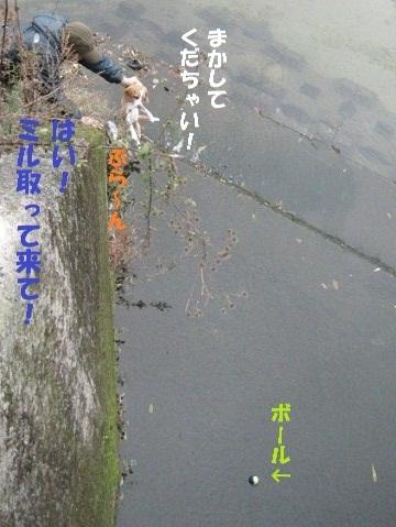 016_20101130211217.jpg