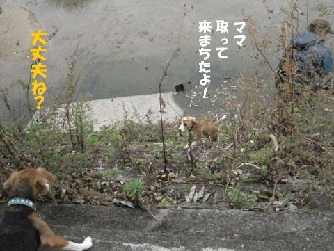 019_20101130211216.jpg