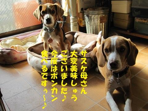 023_20101223120833.jpg