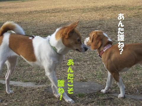 025_20110123220104.jpg