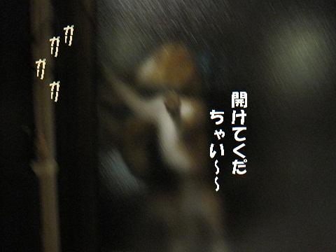 029_20110110104016.jpg