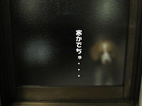 030_20110110104016.jpg