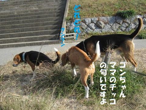 030_20110129181312.jpg