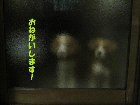 032_20110110104015.jpg
