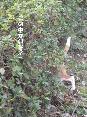 036_20110121180604.jpg