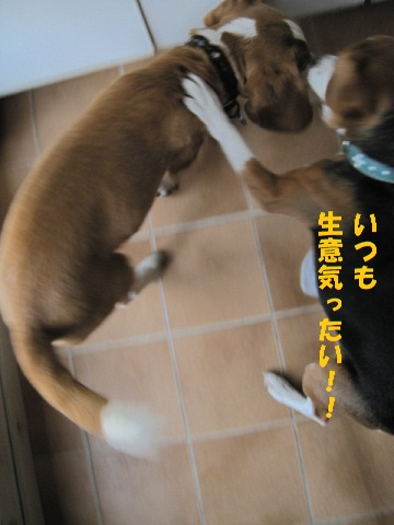037_20101210195244.jpg