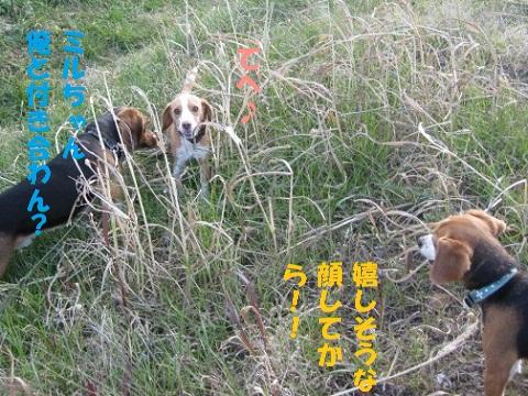 038_20110129181553.jpg