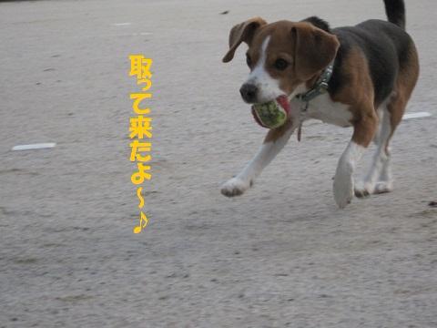 056_20110210212005.jpg