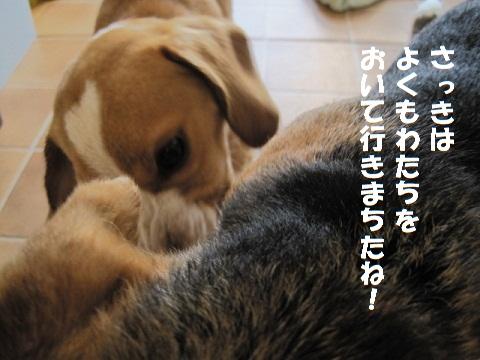 070_20101204075459.jpg