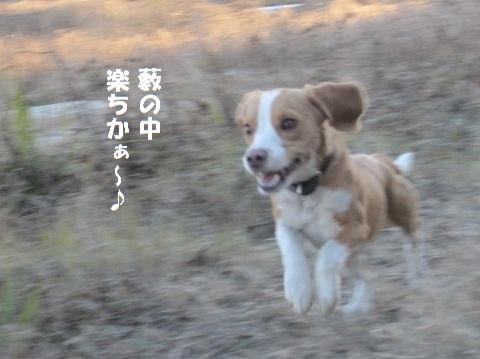 078_20110118170239.jpg