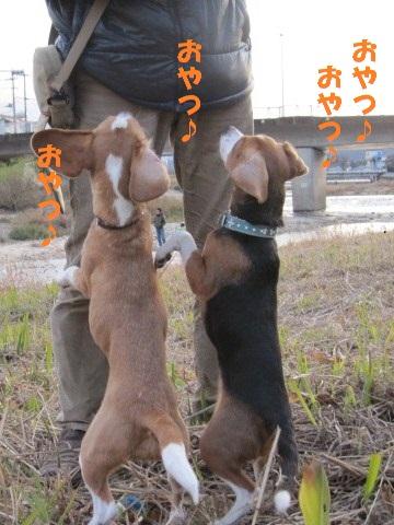 081_20110103212506.jpg