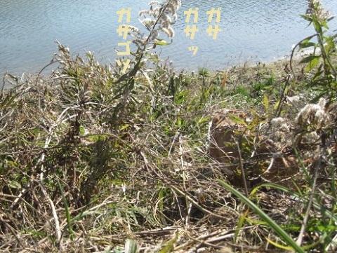 106_20110118164430.jpg