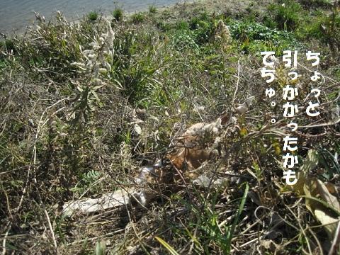 107_20110118164430.jpg