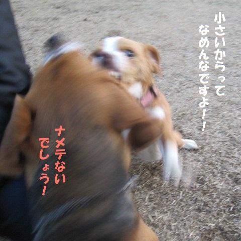 117_20110127172502.jpg