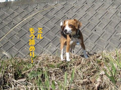 169_20110112080721.jpg