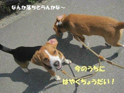 IMG_0188_sh01.jpg