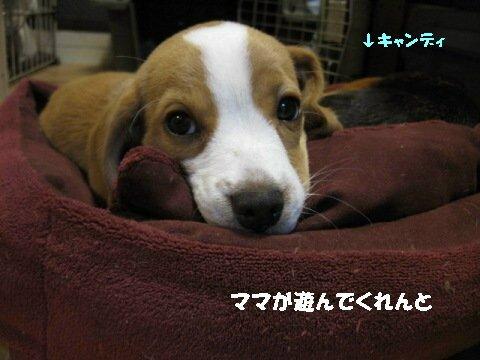 IMG_5027_sh01.jpg