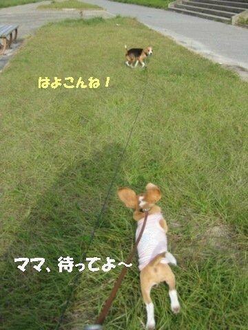IMG_5579_sh01.jpg