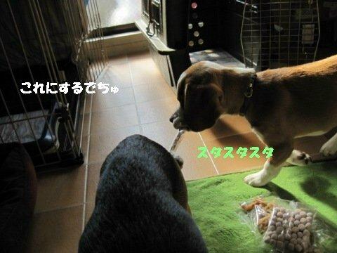 IMG_7054_sh03.jpg
