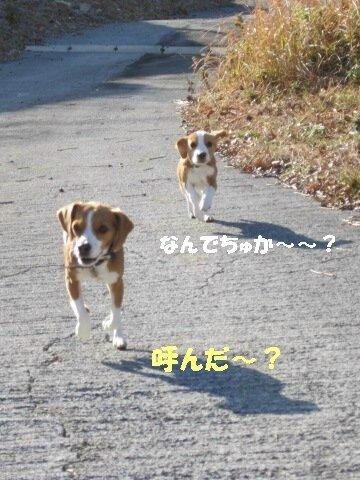 IMG_7428_sh01.jpg