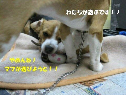 IMG_7730_sh01.jpg