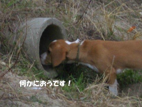 IMG_7763_sh01.jpg