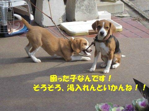 IMG_7931_sh01.jpg