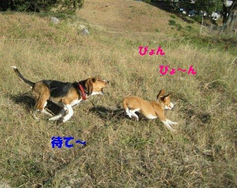 IMG_8170_sh02.jpg