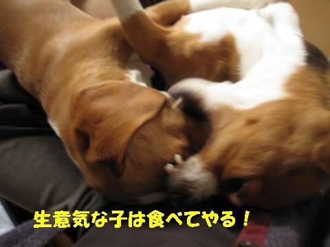 IMG_8369_sh01.jpg