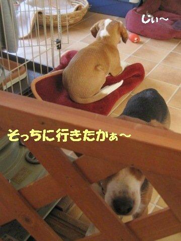 IMG_8714_sh01.jpg