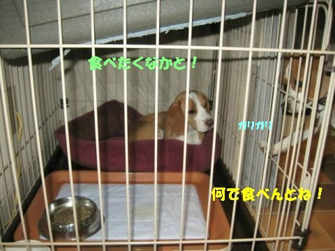 IMG_8737_sh01.jpg