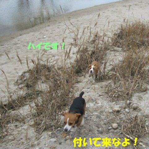IMG_8895_sh01.jpg