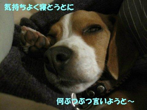 IMG_9042_sh01.jpg